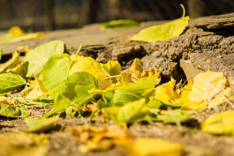 Jordning som trängas ihop av gula höstsidor royaltyfria foton