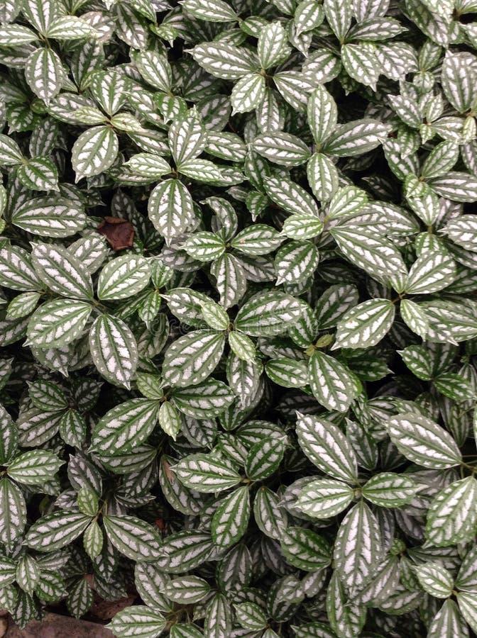 Jordräkningsväxter royaltyfri bild