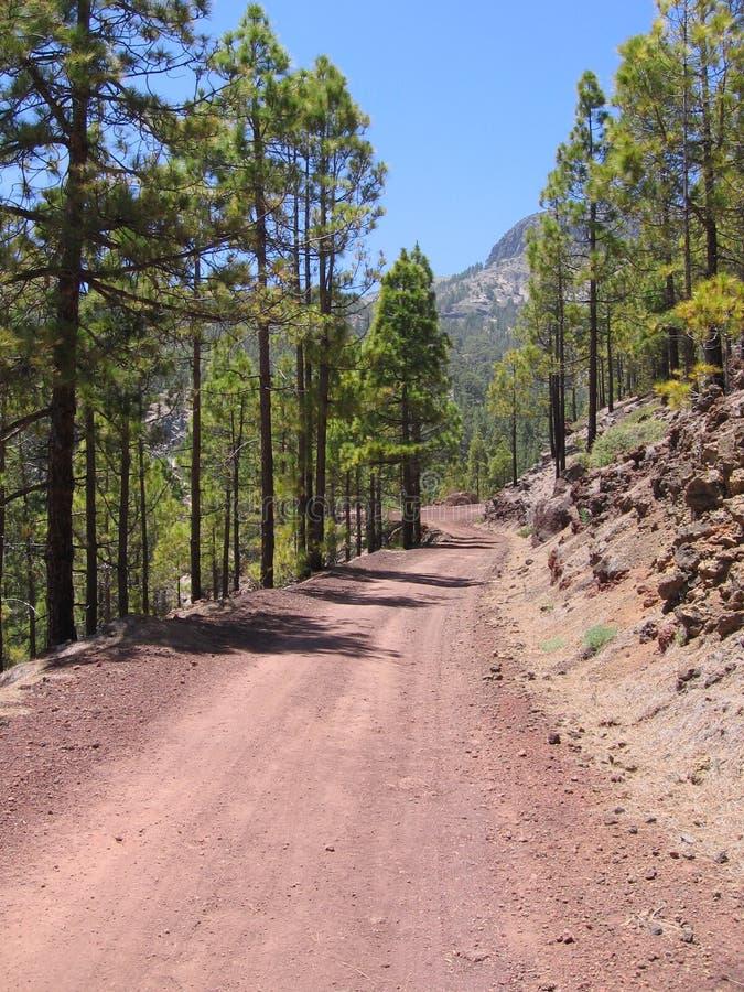 Jordväg i pinjeskog royaltyfri bild