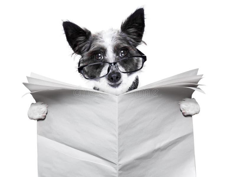 Jornal do cão imagem de stock