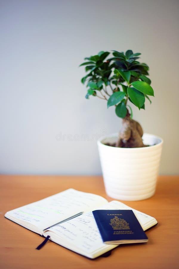 Jornal e passaporte do curso em uma mesa, ao lado de uma planta pequena imagem de stock