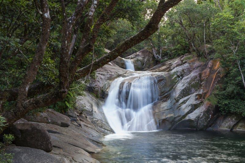 Josephine Spada w Queensland, Australia zdjęcia stock