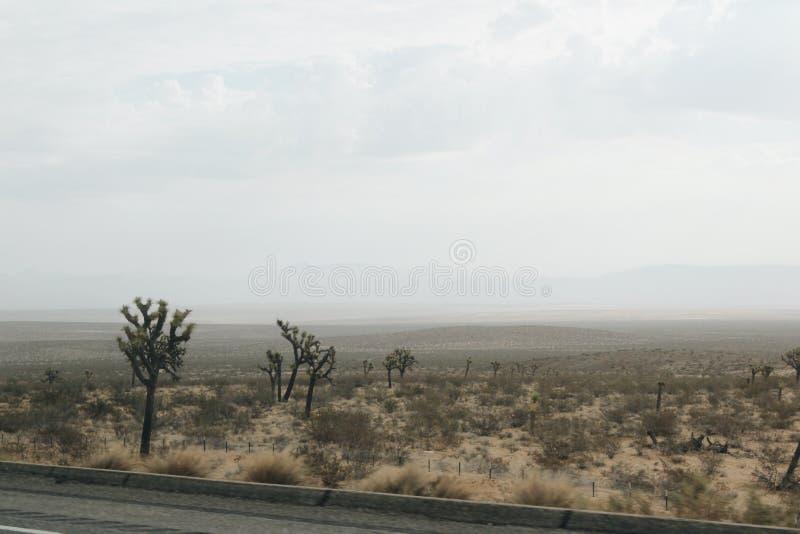 Έρημος Δέντρο του Joshua στοκ φωτογραφίες με δικαίωμα ελεύθερης χρήσης