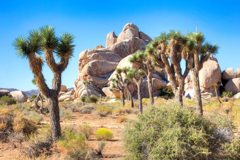 Download Joshua-Bäume stockbild. Bild von wüste, baum, landschaft - 26351811