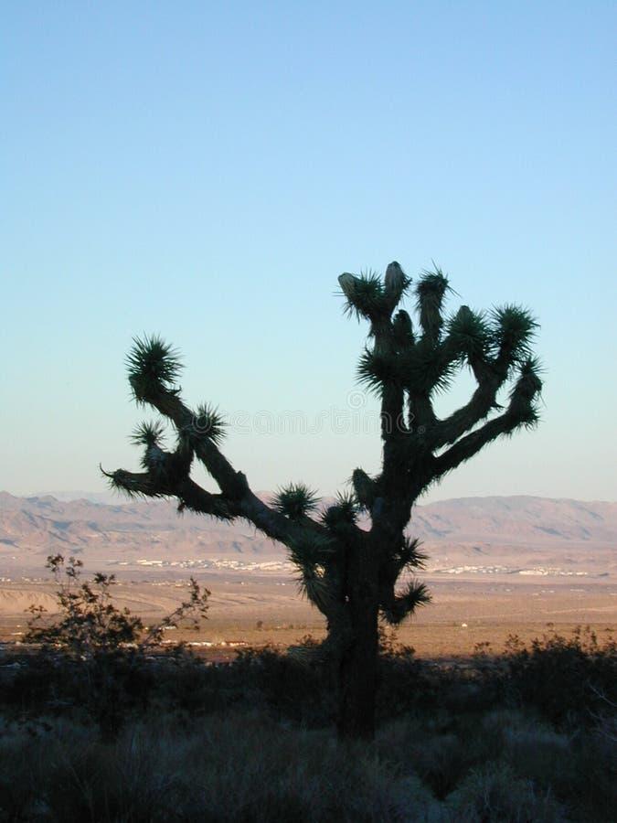 Joshua-Baum Im Joshua-Baum Stockfoto