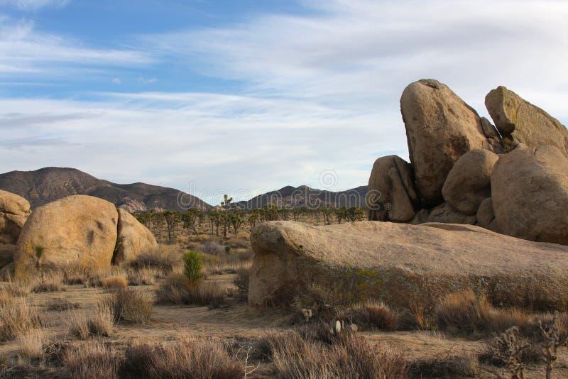 Joshua desert drzewo dni zdjęcie stock