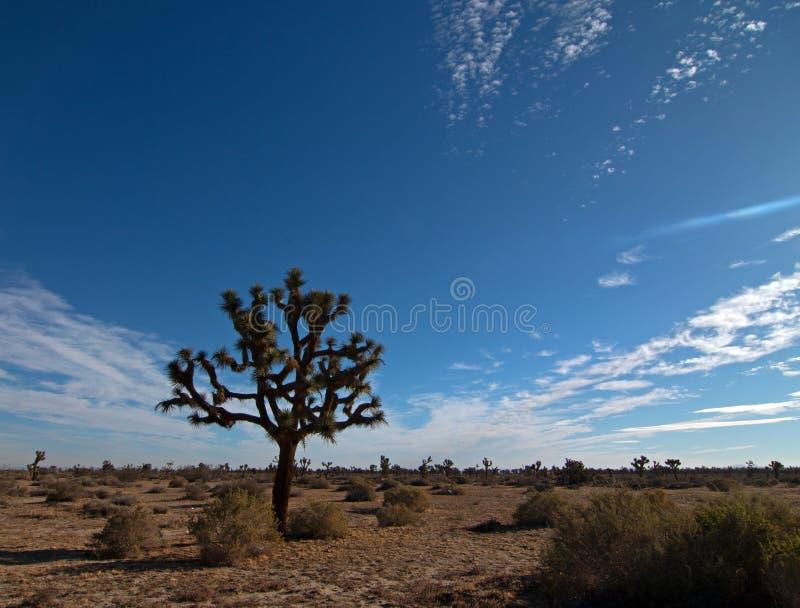 Joshua drzewa cloudscape w Południowego Kalifornia wysokości pustyni obraz royalty free