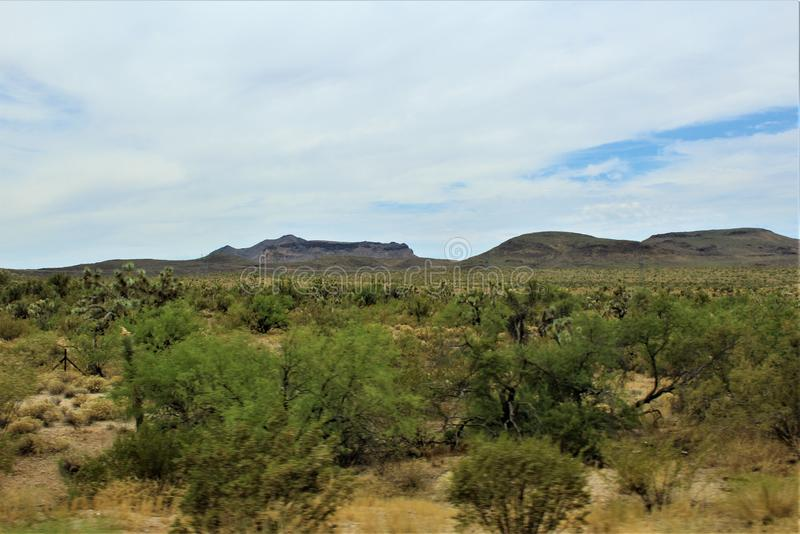 Joshua drzewa Lasowy Parkway, Sceniczna trasa 93, Arizona, Stany Zjednoczone obrazy stock