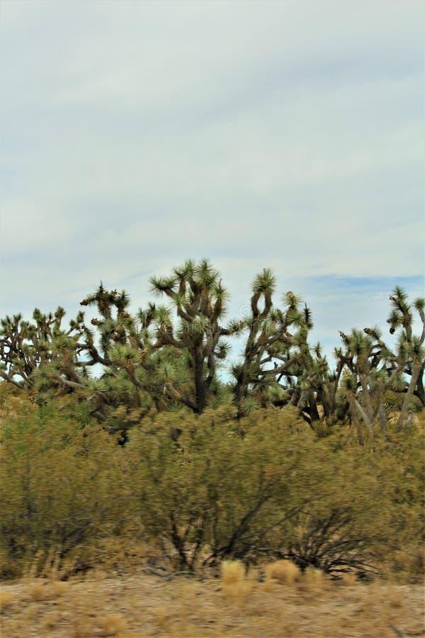 Joshua drzewa Lasowy Parkway, Sceniczna trasa 93, Arizona, Stany Zjednoczone zdjęcia stock