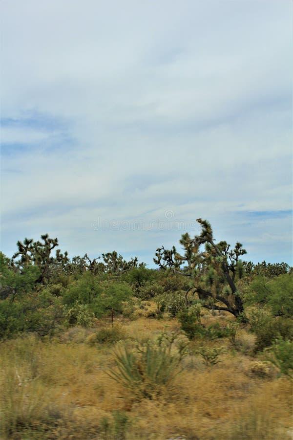 Joshua drzewa Lasowy Parkway, Sceniczna trasa 93, Arizona, Stany Zjednoczone obraz royalty free