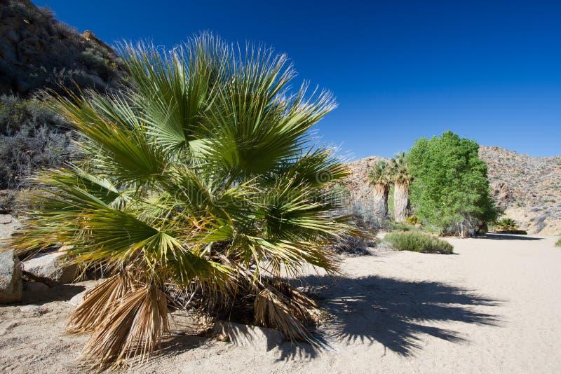 Joshua drzewa park narodowy zdjęcie royalty free
