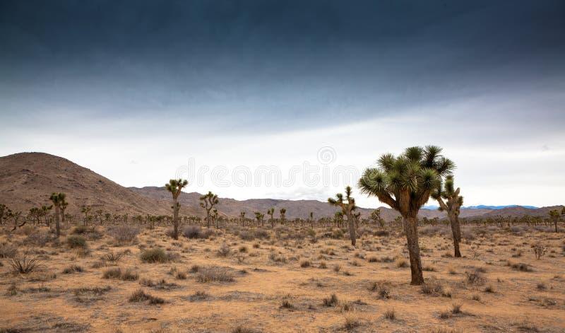 Joshua drzewa park narodowy, Kalifornia zdjęcie royalty free