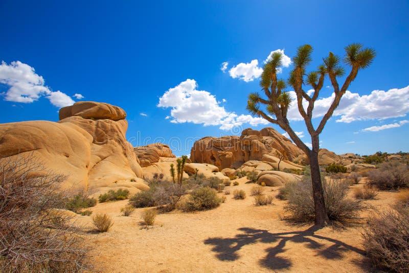 Joshua drzewa parka narodowego skał jukki doliny Olbrzymia pustynia Califo fotografia royalty free