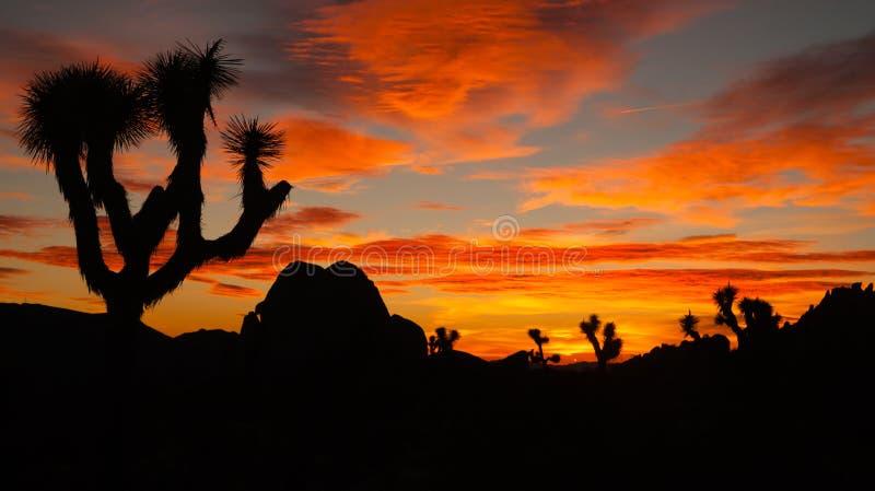 Joshua drzewa zmierzchu chmury krajobrazu Kalifornia park narodowy obraz stock