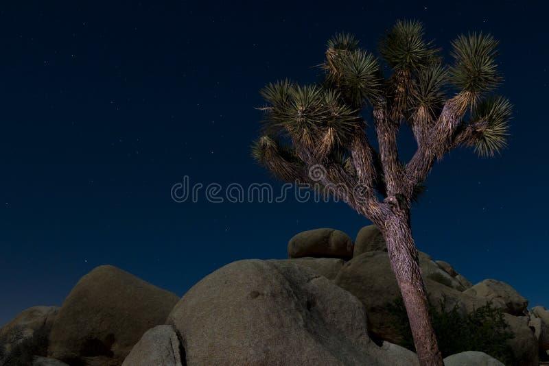 joshua noc drzewo zdjęcia stock