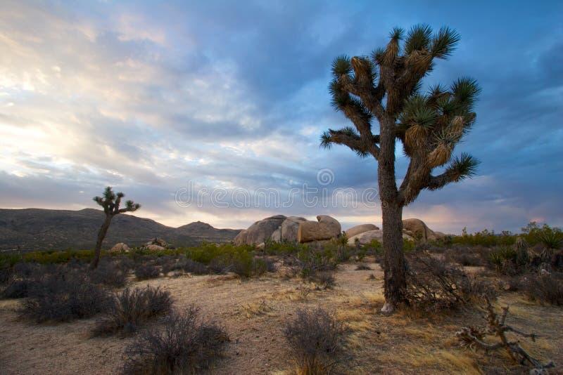 joshua sunrise drzewa zdjęcie royalty free