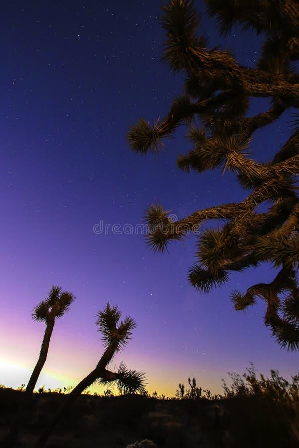 Joshua träd mot solnedgångbakgrund fotografering för bildbyråer