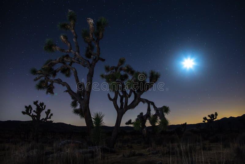 Joshua träd på natten arkivfoto