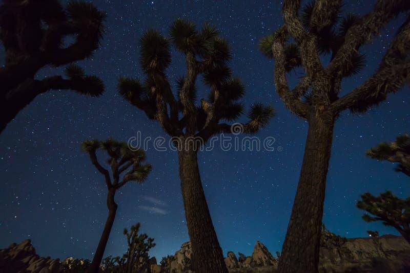 Joshua träd på natten arkivfoton