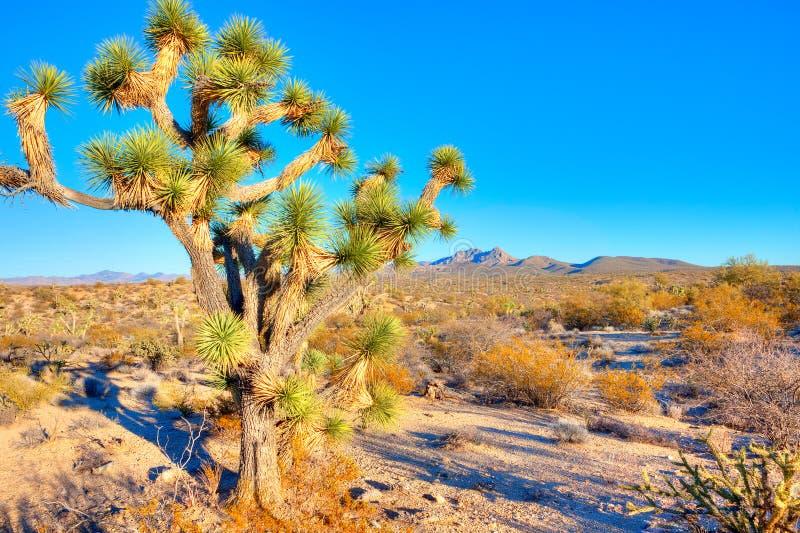 Joshua Tree photos stock
