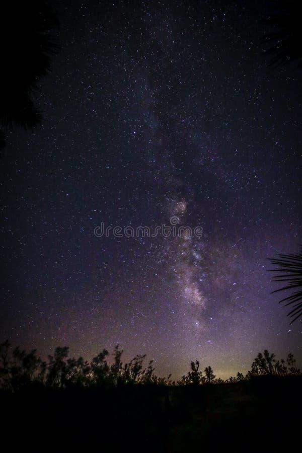Joshua Tree Against Dark Sky bakgrund arkivbilder