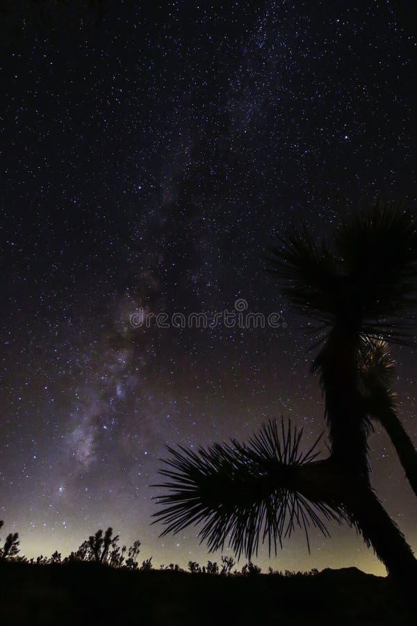 Joshua Tree Against Dark Sky bakgrund royaltyfri fotografi