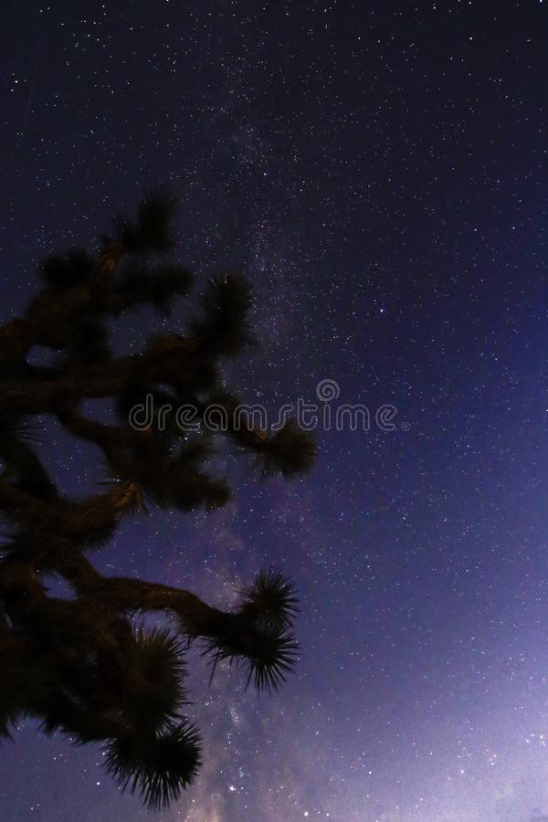 Joshua Tree Against Dark Sky bakgrund arkivfoto