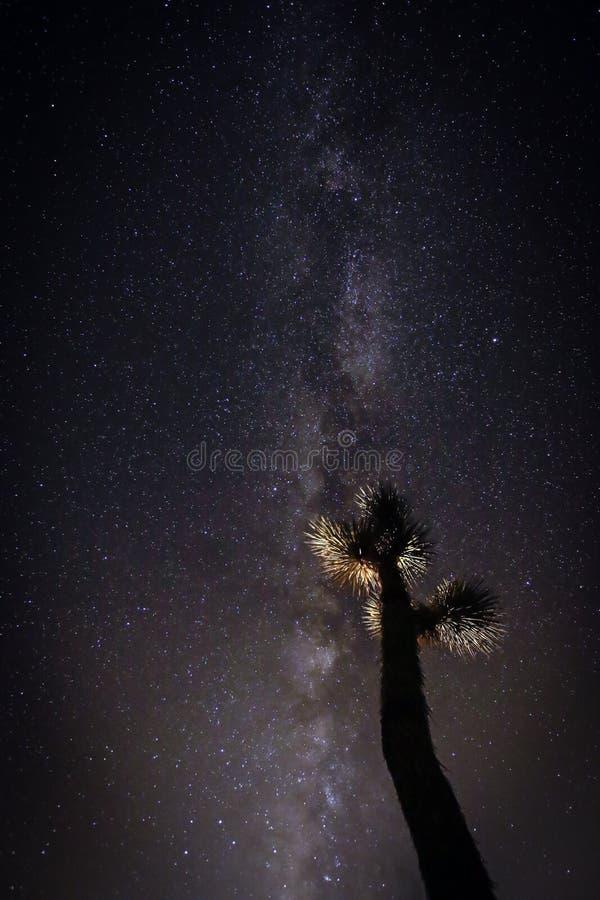 Joshua Tree Against Dark Sky bakgrund arkivfoton