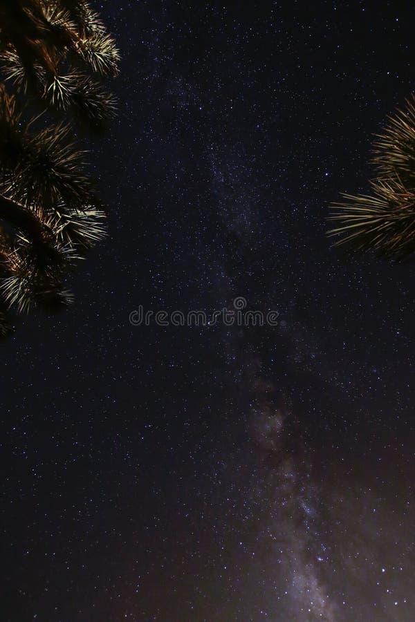 Joshua Tree Against Dark Sky bakgrund royaltyfria foton
