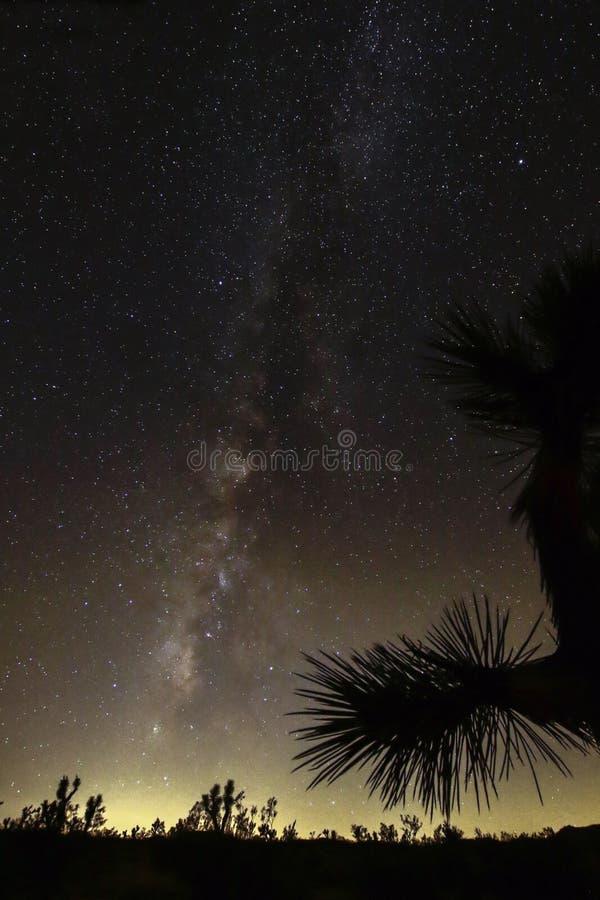 Joshua Tree Against Dark Sky bakgrund arkivbild