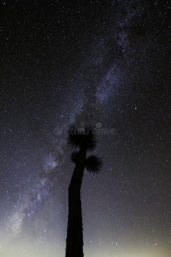 Joshua Tree Against Dark Sky bakgrund royaltyfria bilder