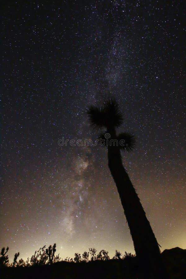 Joshua Tree Against Dark Sky bakgrund royaltyfri foto
