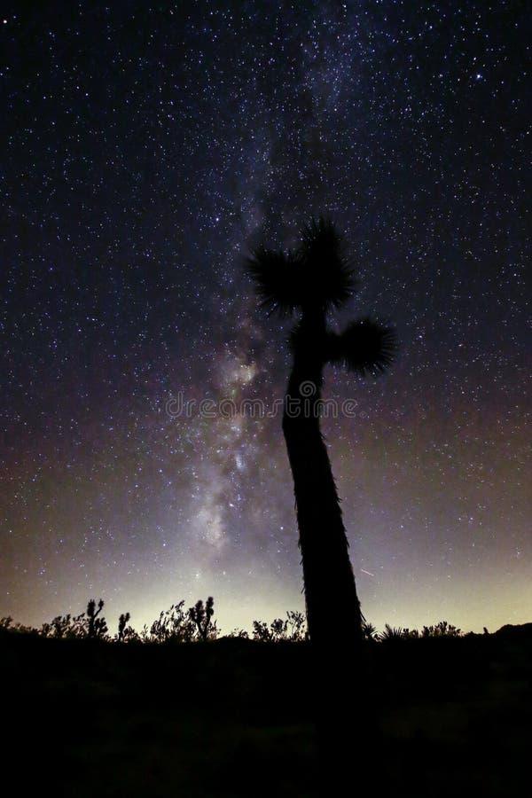 Joshua Tree Against Dark Sky bakgrund royaltyfri bild