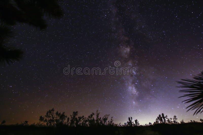 Joshua Tree Against Dark Sky bakgrund fotografering för bildbyråer