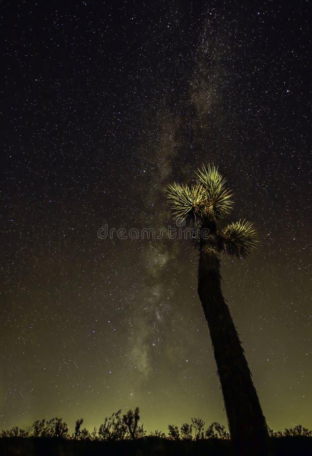 Joshua Tree Against Milky Way bakgrund royaltyfri foto