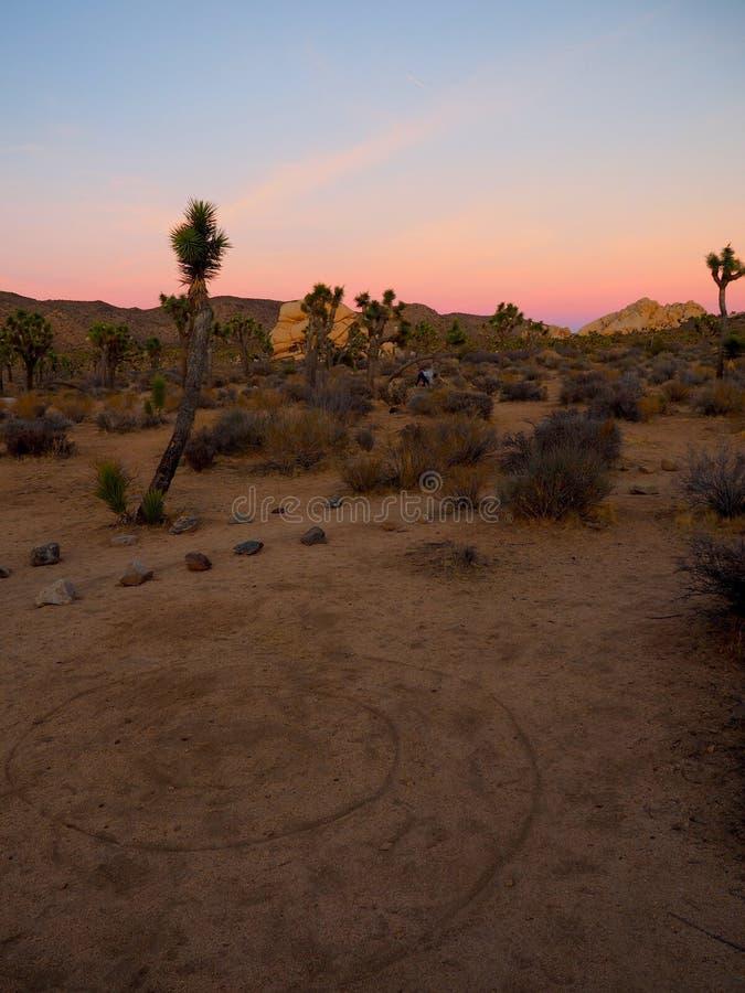 Joshua Tree California på solnedgången arkivfoto