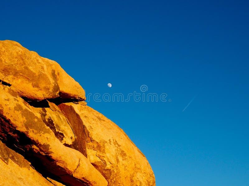 Joshua Tree California på solnedgången royaltyfria bilder