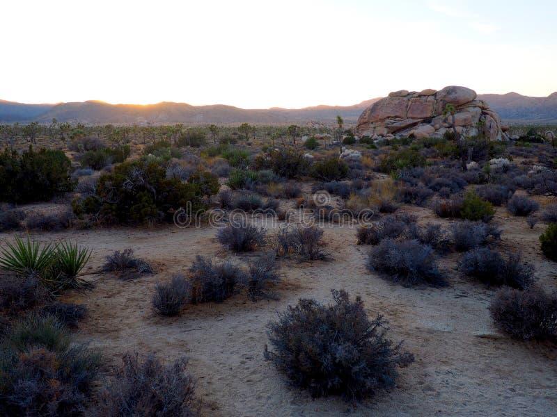 Joshua Tree California på solnedgången royaltyfri foto