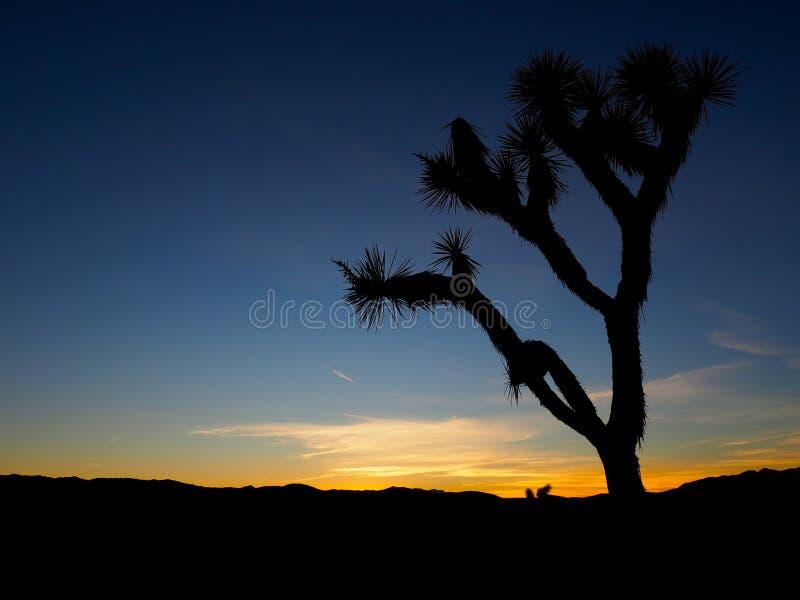 Joshua Tree California på solnedgången royaltyfri fotografi