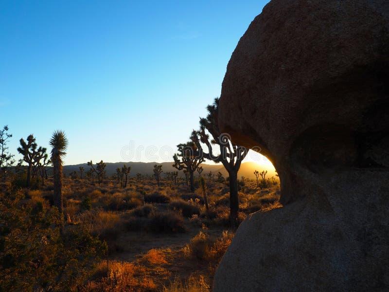 Joshua Tree California på solnedgången arkivfoton