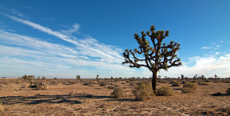 Joshua Tree cloudscape in Southern California high desert near Palmdale and Lancaster. USA royalty free stock image