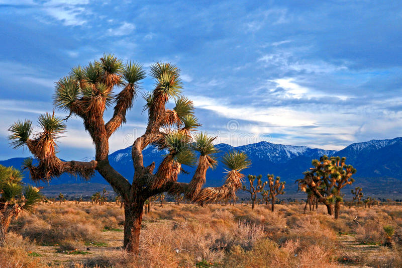 Joshua Tree cloudscape in Southern California high desert near Palmdale and Lancaster. USA royalty free stock images