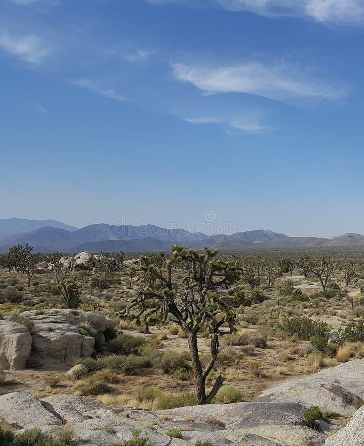 Joshua Tree in Desert Landscape. Joshua Tree in Desert Wilderness Landscape with blue sky and wispy clouds stock image
