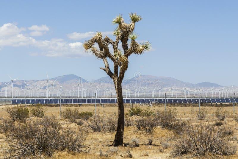 Joshua Tree in deserto industriale immagini stock