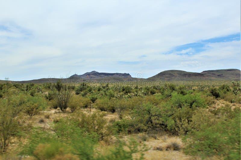 Joshua Tree Forest Parkway, rota cênico 93, o Arizona, Estados Unidos imagens de stock