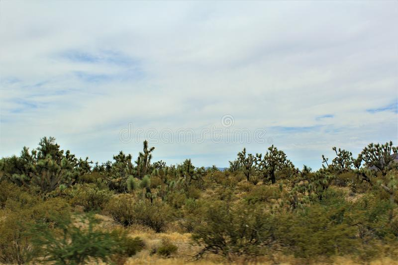 Joshua Tree Forest Parkway, ruta escénica 93, Arizona, Estados Unidos fotografía de archivo libre de regalías