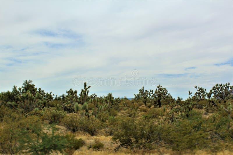 Joshua Tree Forest Parkway scenisk rutt 93, Arizona, Förenta staterna royaltyfri fotografi
