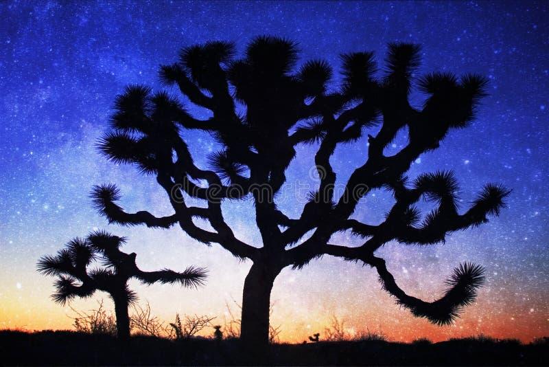 Joshua Tree mostrou em silhueta com Via Látea, Josh Tree National Park fotos de stock royalty free