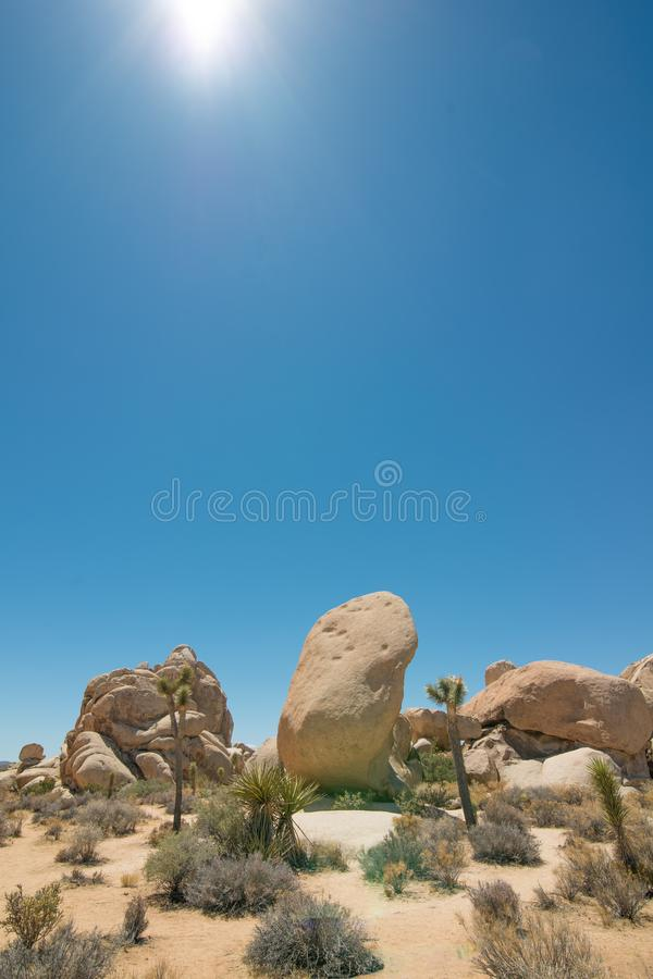 Joshua Tree National Forest - Landscape of park that contains desert, shrubs, yucca trees, and joshua trees - image with huge boul. Der and hot sun shining down royalty free stock photo