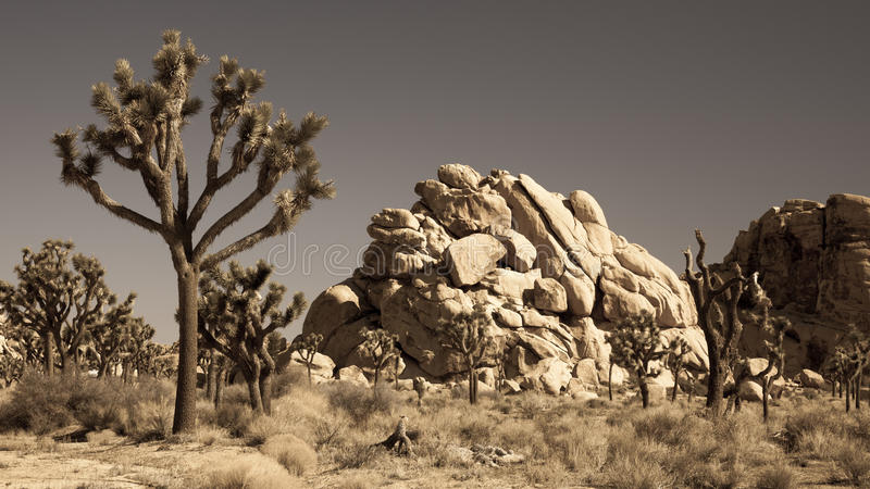 Download Joshua Tree National Park stock photo. Image of bush - 26766864